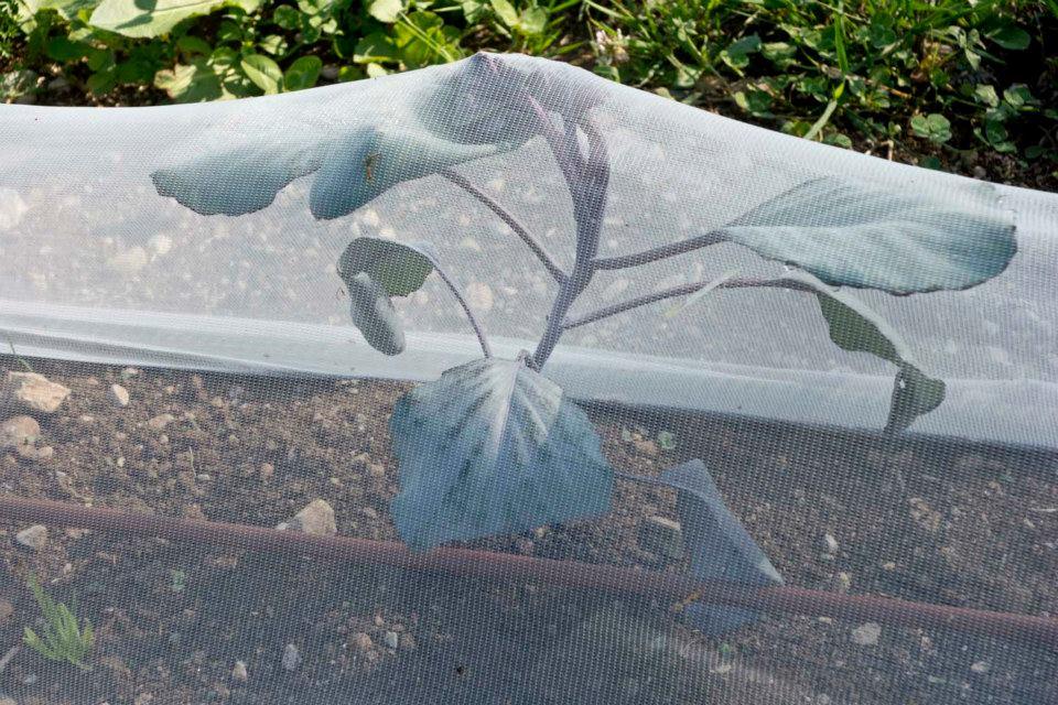 Le jardin à Emporter - Irrigation
